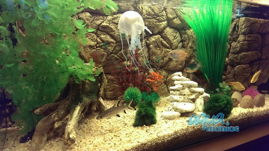 3d thin rock background for narrow aquariums and vivariums for Thin fish tank