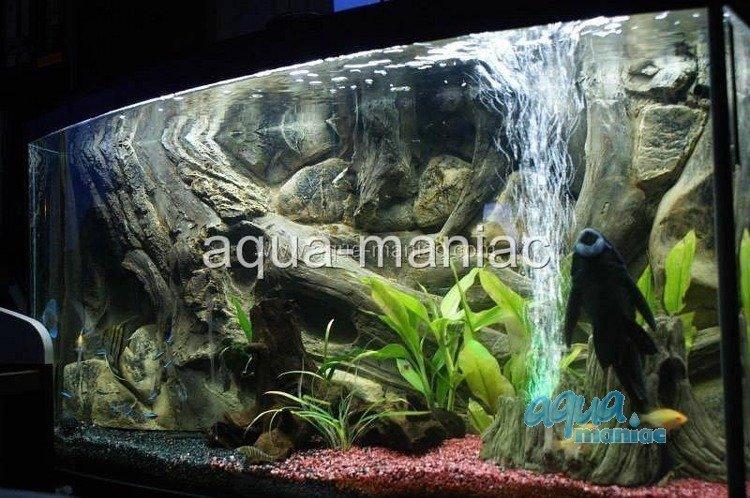 3d aquarium background amazon design for tropical fish tanks for Amazon aquarium fish