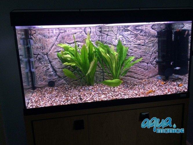 aquarium background for fluval vicenza 260 aquarium 3d thin rock background. Black Bedroom Furniture Sets. Home Design Ideas