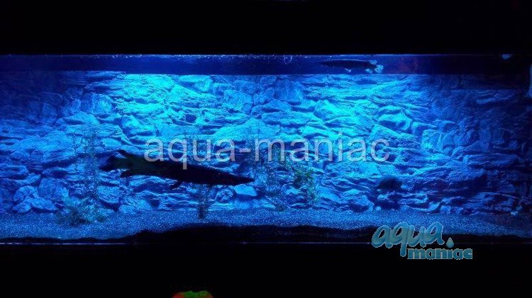 aquarium background for juwel aquarium vision 260 3d. Black Bedroom Furniture Sets. Home Design Ideas