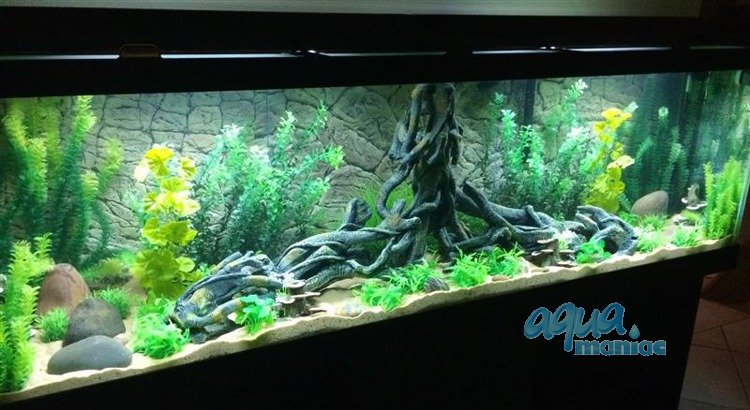 aquarium background for juwel aquarium vision 260 3d thin. Black Bedroom Furniture Sets. Home Design Ideas