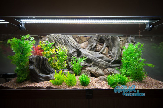Fluval Roma 125 amazon background 78x43cm 1 section