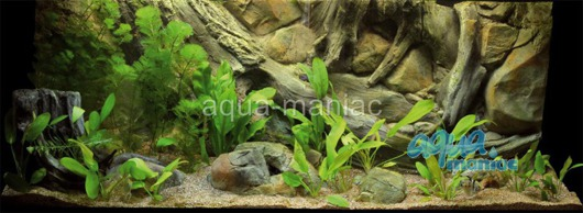 JUWEL RIO 240 3D amazon background 117x45cm in 2 sections