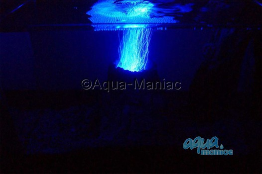 LED Aquarium Volcano with illuminated blue bubbles
