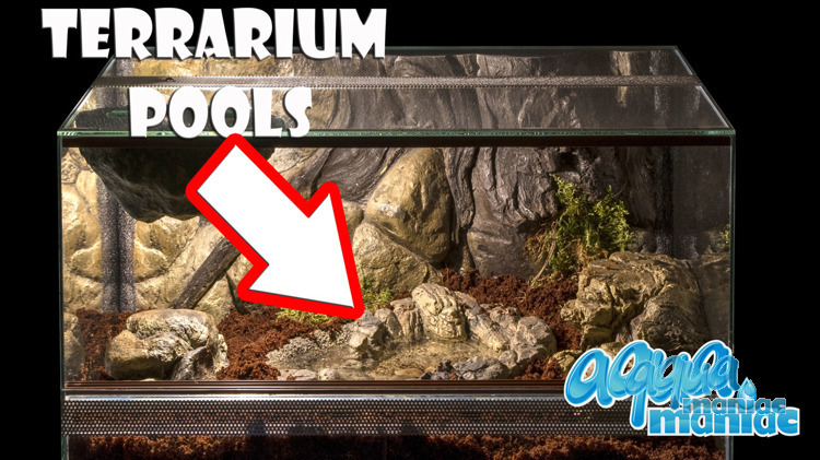Terrarium Pool for reptiles - small