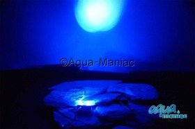 Aquarium Led Lights 2 Blue
