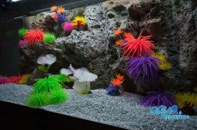 Modules of Limestone Background with corals to fit 120x50cm aquarium
